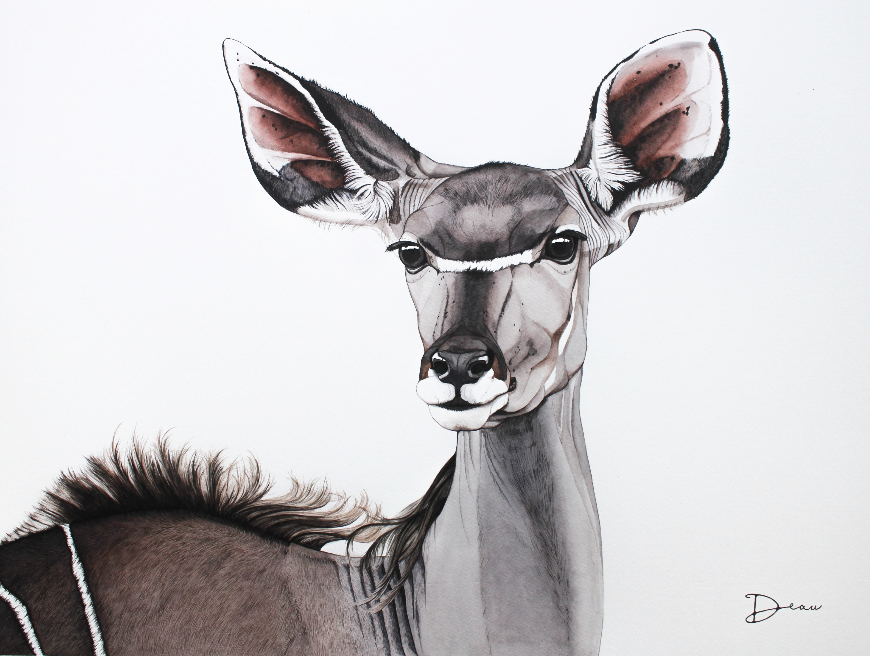 Michiels Female Greater Kudu