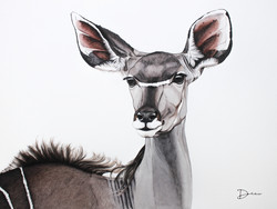 Michiels Greater Kudu - Female