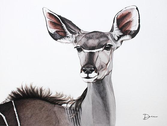 Michiels Greater Kudu - Female