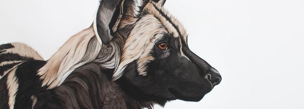 Shenzi - African Wild Dog