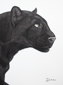 Bagheera - Black Panther | Custom Made