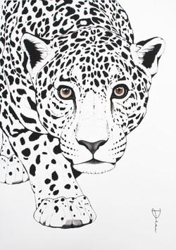 Jaguar Black&White