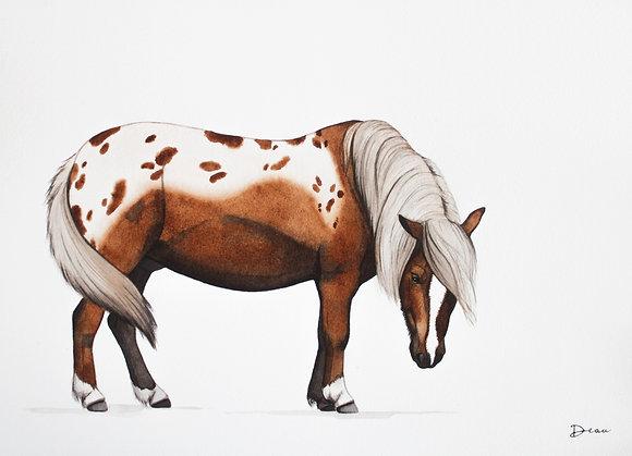 Bram - Shetland Pony
