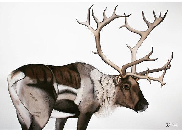 Mauritz - Reindeer