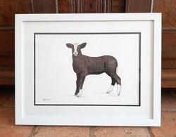 Zwartbles Lamb  |  € 280
