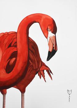 Chico - Caribbean Flamingo