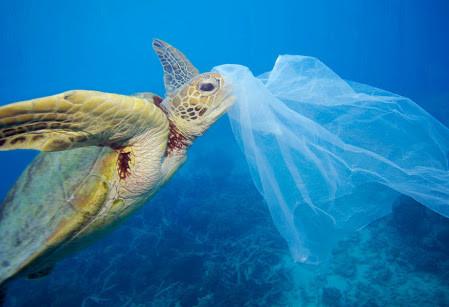Help je mee? Red de zee van plastic!