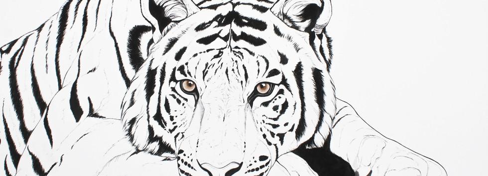 Radja - Bengal Tiger