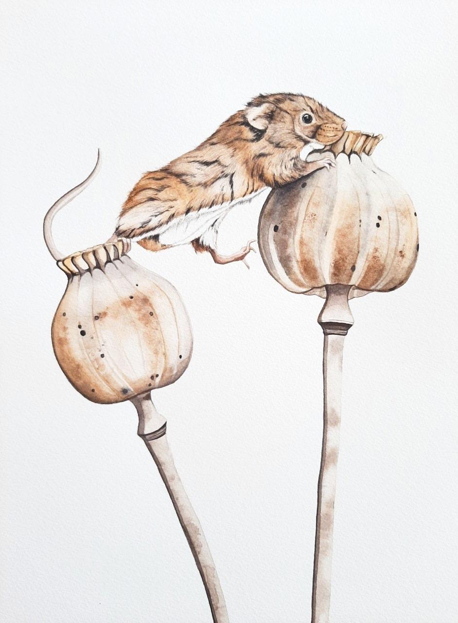 Harvest Mouse | € 250