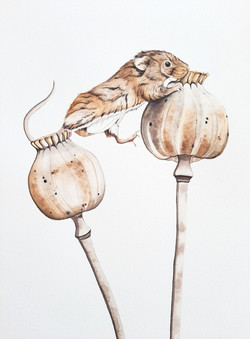 Harvest Mouse | € 250