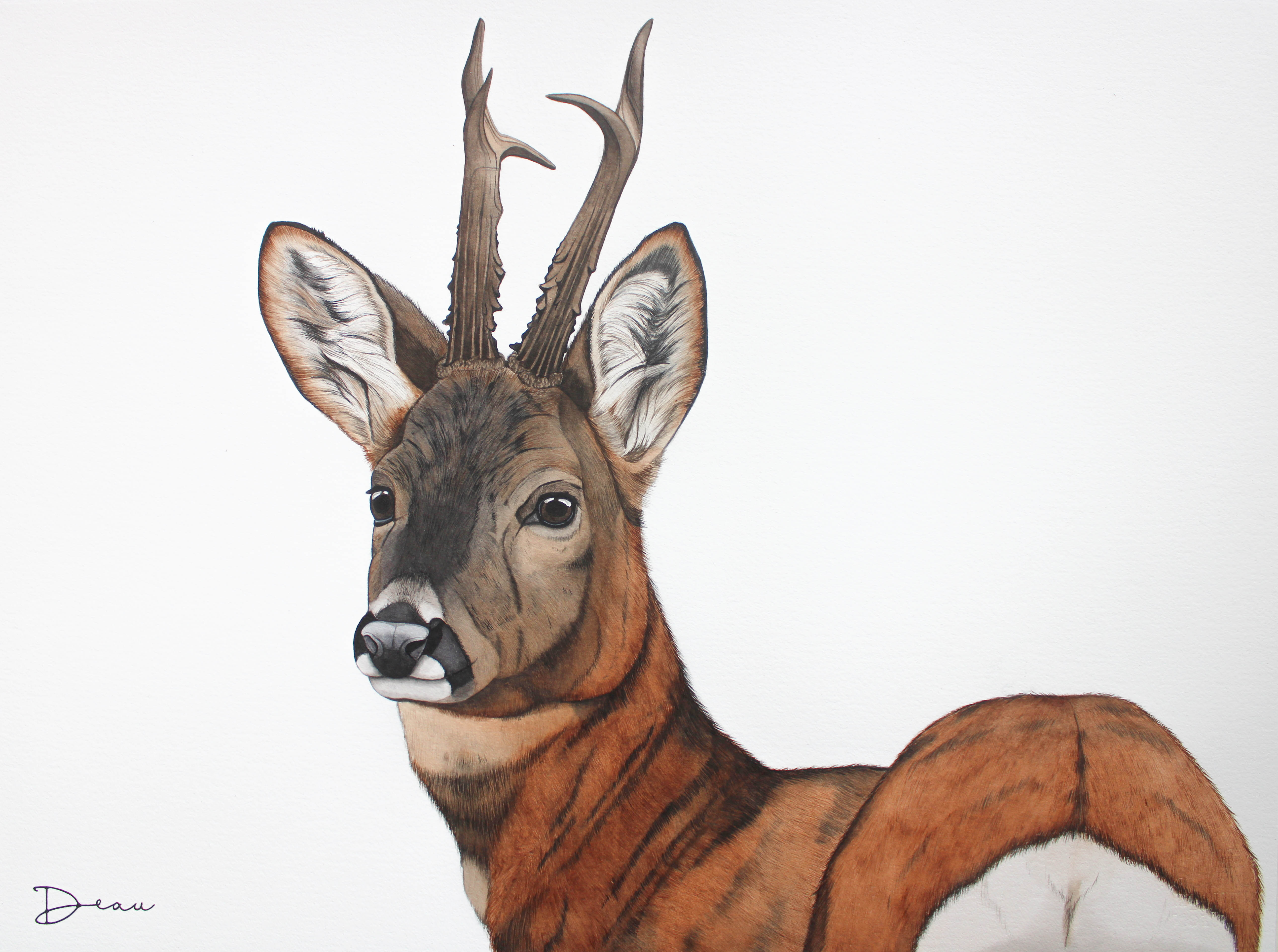 Floris - Roe Deer Stag | SOLD