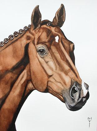 KWPN Dressage Horse - Vivaldi