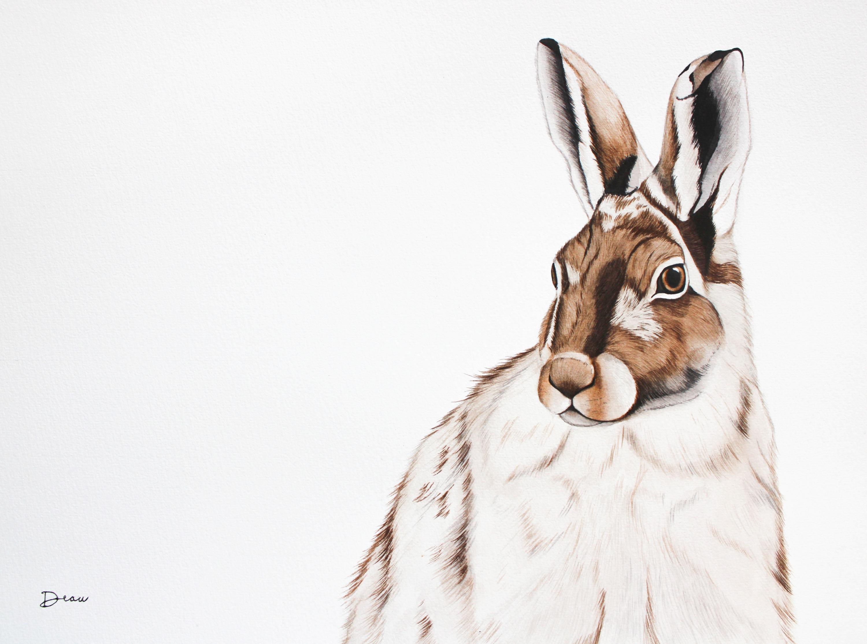 Thomas - Arctic Hare | €450