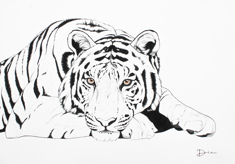 Radja The Bengal Tiger | Sold