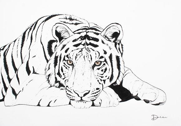 Radja The Bengal Tiger