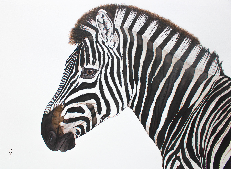 Michiels Burchell's Zebra
