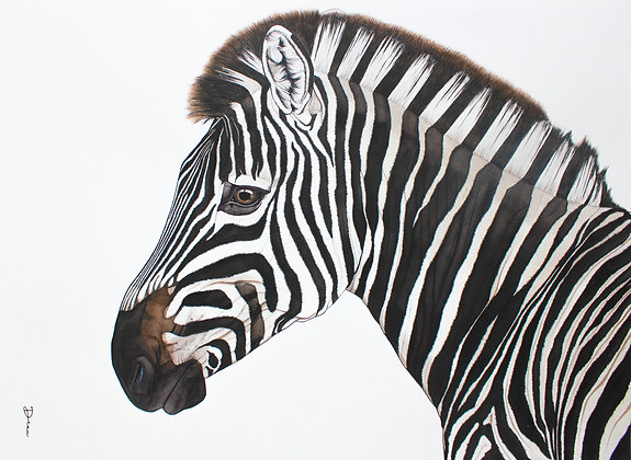 Michiels Burchell's Zebra