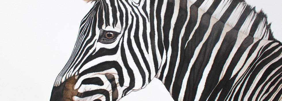 Michiels Burchells Zebra