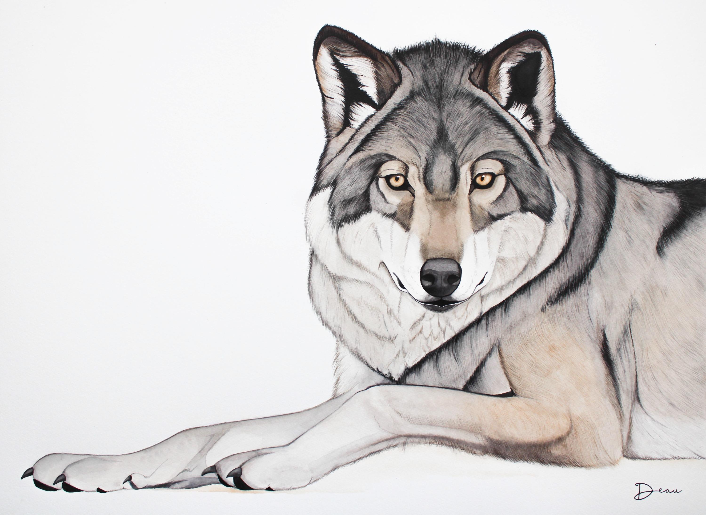 Toto - Eurasian Wolf