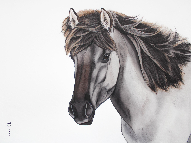 Michiel's Konik Horse | €650