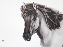 Michiel's Konik Horse   €650