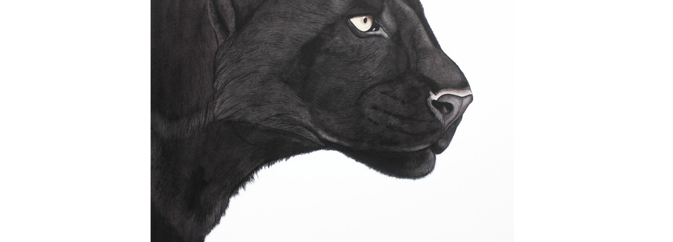 Bagheera - Black Panther