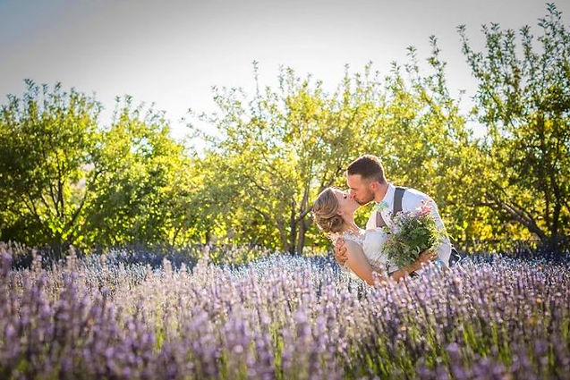 Lavender Ridge.JPG