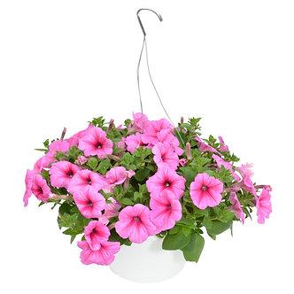 """Hanging Basket 10"""" Pink Petunias"""