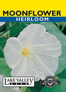 MOONFLOWER WHITE   HEIRLOOM