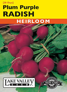 RADISH PLUM PURPLE  HEIRLOOM