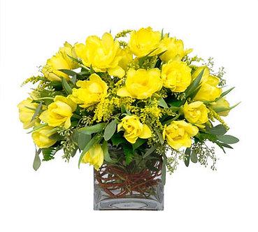 Yellow Tulip Square
