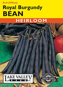 BEAN BUSH ROYAL BURGUNDY (PURPLE)   HEIRLOOM