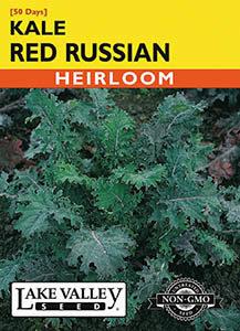 KALE RED RUSSIAN (RAGGED JACK)  HEIRLOOM
