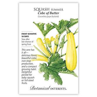Squash Summer Cube Butter hybrid