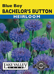 BACHELOR'S BUTTON BLUE BOY HEIRLOOM