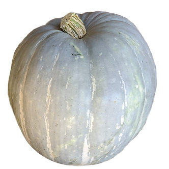 Ghost Pumpkin Medium