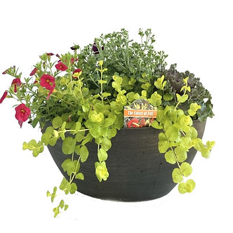 Fall Color Cool Weather Patio Container Oval Shape