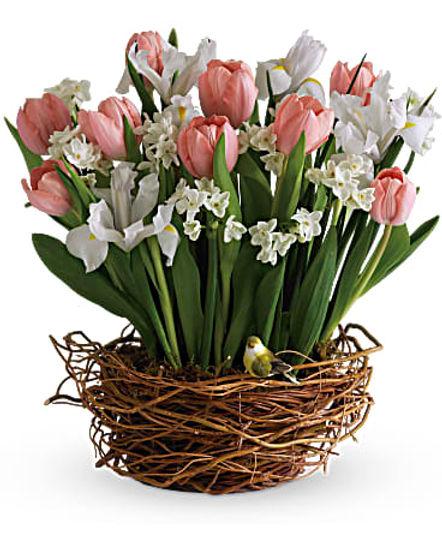 Tulip Song