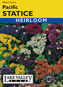 STATICE PACIFIC MIXED COLORS HEIRLOOM