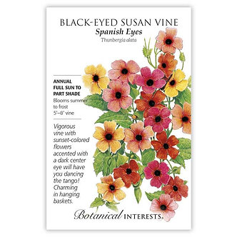 Black-Eyed Susan Vn Spanish Eyes