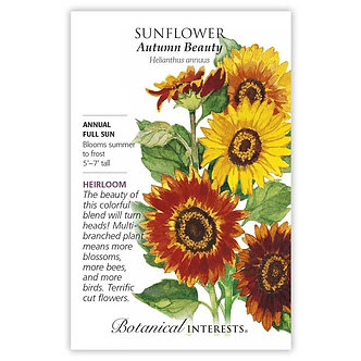 Sunflower Autumn Beauty