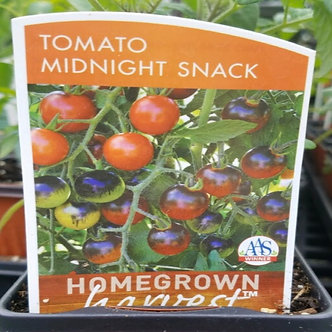 "MidNight Snack Tomato 3.5"" Pot"