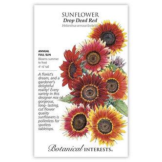 Sunflower Drop Dead Red hybrid