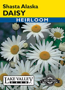 DAISY SHASTA ALASKA  HEIRLOOM