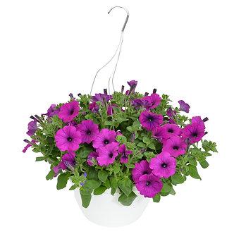 """Hanging Basket 10"""" Purple Petunias"""