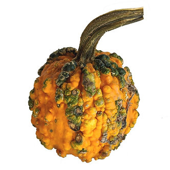 Small Warty Pumpkin