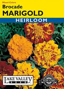 MARIGOLD BROCADE MIXED COLORS HEIRLOOM