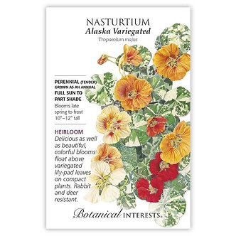 Nasturtium Alaska Variegated