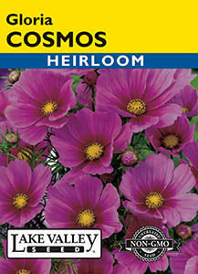 COSMOS GLORIA  HEIRLOOM