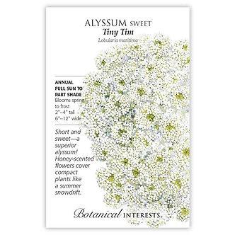 Alyssum Sweet Tiny Tim